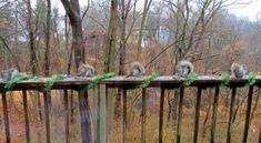 Christmas Squirrel, Plants, Animals, Facebook, Animais, Animales, Animaux, Animal, Plant