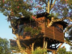 Here, we compiled 10 awe-inspiring treehouse designs that make us think it was worth all the trouble.