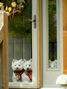 West Highland TERRIERIST Door Gate Funny Dog Sign