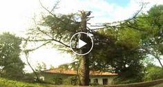 Corte De Árvore Termina Com Queda De 2 Madeireiros http://www.shocktv.biz/corte-arvore-termina-queda-de-2-madeireiros/