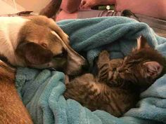 Anxious Dog Bonds With Rescue Kitten