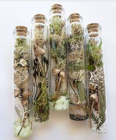 Made some neat terrarium/specimen bottles. I didnt kill the butterfly! - Made some neat terrarium/specimen bottles. I didnt kill the butterfly! Deco Floral, Arte Floral, Magick, Witchcraft, Deco Nature, Witch Aesthetic, Diy Décoration, Nature Crafts, Book Of Shadows