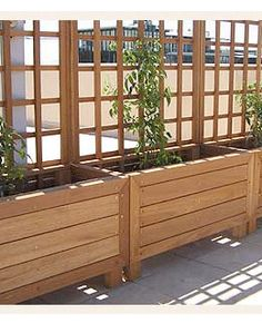 Screening Option:  A trellis could be added to the wooden planters on either the east side or south side with flowering evergreen vines, examples including Carolina Yellow Jessamine and/or Clematis armandii (see photos).