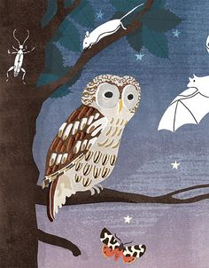 Owly detail from a new book out later this year