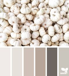 { harvest tones } | image via: @suertj  ... #color #palette #colorpalette #pallet #colour #colourpalette #design #seeds #designseeds #seedscolor