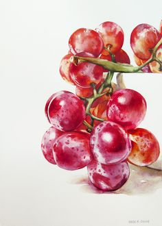 """Grape Study"" - 10.5"" x 7.5"" - watercolor on paper. Painting by Kara K. Bigda."