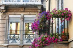 Balcony flowers.