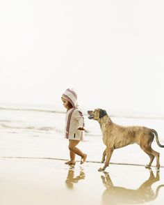Sharon Montrose_Lifestyle Dog Photographer_03