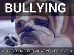 """Bullying - """"Stay Strong for What You Believe In,"""" from the classroom of @DavidFifeVP"""