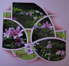4 Photos, Creations, Wreaths, Cannes, Plants, Scrapbooking, Home Decor, Brother, Flowers