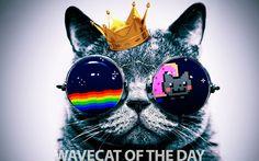 Wavecat