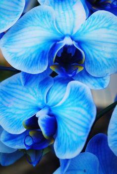 Orchids!!! ♥