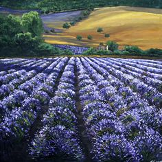 Summer in Provence - Lavender Field Painting of Provence France, Contemporary Lavender Art