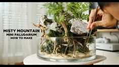Misty Mountain Wabi Kusa - How to do Terrariums, Terrarium Scene, Terrarium Diy, Fish Pond Gardens, Small Gardens, Diy Aquarium, Planted Aquarium, Indoor Water Garden, Moss Plant