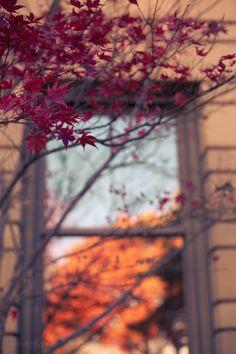 harvest moon, falling leaves….