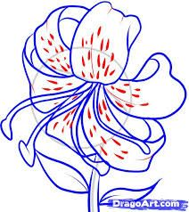 Image result for stargazer lily sketches