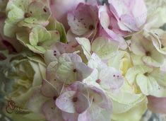 """Мастер-класс """"Гортензия Antique Green Pink из зефирного фоамирана"""""""