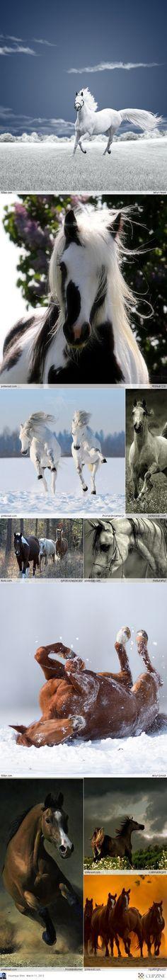 Horses & More Horses