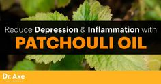 There are many health and beauty benefits from just a few drops of patchouli oil, including treating depression and boosting the immune system.