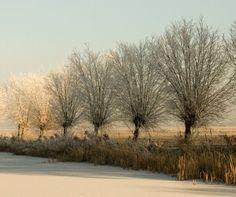 Winter road with pollard willows, Groningen, northern Netherlands (photo by W. Meiburg)