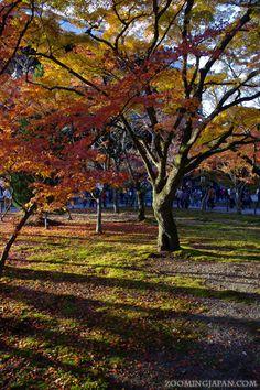 Autumn leaves at Nanzenji Temple in Kyoto.