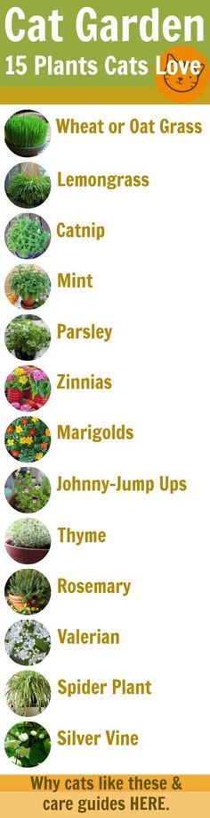 Cat Garden Guide: 15 Feline-Safe Plants Cats Love (why they like them and grow guides for each) #CatIdeas