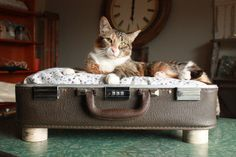 Pet bed made from old suitcase. Love this idea, you get 2 out of each suitcase.  :)