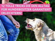 Dein Hund ist sicher dein Ein und Alles, aber manchmal gibt es Momente, bei denen man nicht so recht weiter weiß. Was tun, wenn mein Hund das Essen herunterschlingt? Wie finde ich meinen Hund wieder, wenn er verloren gegangen ist? Kann mein Hund eigentlich alles essen? 1. Hundehaare entfernen...