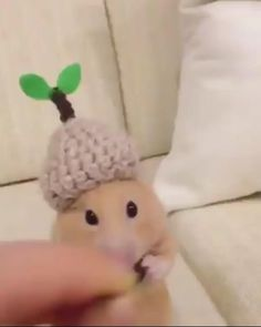 Baby Animals Super Cute, Cute Little Animals, Cute Funny Animals, Funny Cute, Cute Animal Videos, Funny Animal Pictures, Chug Dog, Funny Hamsters, Animal Jokes