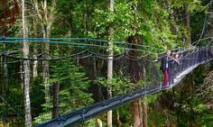 Admission to the Greenheart Canopy Walkway for One Person or a Family at UBC Botanical Garden (Up to Off) Asian Garden, Thing 1, Western Red Cedar, Douglas Fir, Summer Activities, Walkway, Botanical Gardens, Bald Eagle, Canopy