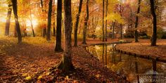 """Golden Park - Late autumn colors and the first sunrays enchant this scene into a great atmosphere. I think in a week most of the leaves droppd.  from """"Tribute to my home""""  www.stefan-hefele.de"""