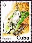Cuban Postage Stamp - White Horse Running Down Steep Hillside