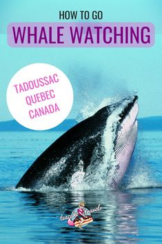 How To Experience The Best Whale Watching Tadoussac Has To Offer! Interested in going whale watching in Tadoussac in Quebec Canada? This is how to experience the best whale watching Tadoussac has to offer! From what to pack, what tour to take, what mont Travel Usa, Travel Tips, Budget Travel, Discover Canada, Canada Destinations, Canadian Travel, Visit Canada, Whale Watching, What To Pack