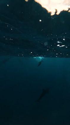 Delfini 🐬🐬🐬🐬