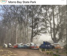 Eucalyptus Tree, Pismo Beach, Central Coast, Group Tours, Canopy, Vines, Camping, Photo And Video, Outdoor