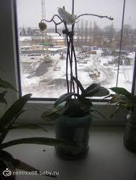 Картинки по запросу Показать картинки горшочки орхидеи в стеклянной вазе