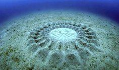 fundo do mar peixes - Pesquisa Google