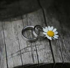 Daisy Love, Silver Rings, Wedding Rings, Engagement Rings, Flowers, Jewelry, Daisies, Amor, Life