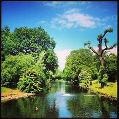 Taken yesterday in Regents Park this shows summer is amazing in London. Taken by @Katie Edfeldt this is one of our favourites from the newest pics to be tagged #igerslondoninthepark keep tagging to be part if our contest!