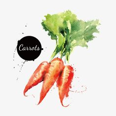 Rábano,Zanahoria,Acuarela,Verduras