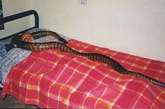 Ella dormía con una serpiente todas las noches lo que paso luego te dejará sin palabras