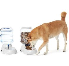 Gravity Cat or Dog Feeder and Waterer Bundle, Small Pumi Dog, Tamaskan Dog, Kangal Dog, Food Feeder, Pet Feeder, Poochon Dog, Mastador Dog, Papillion Dog, Dog Water Dispenser