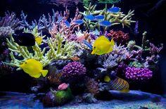 Marine Aquarium, Reef Aquarium, Saltwater Aquarium, Corals, Aquariums, Fish Tank, Tanks, Divider, Ocean