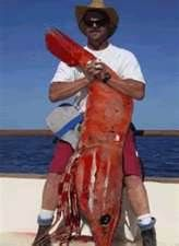 Image Search Results for biggest shrimp in the world