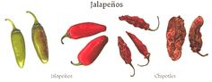 A Guide To Mexican Chiles