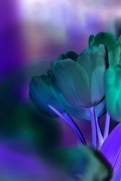 lilas azules verdes.....la combinacion perfecta!