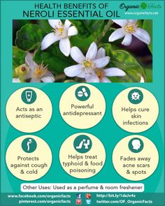 Health Benefits of Neroli Essential Oil | Organic Facts
