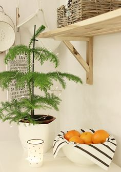 Hurmaava huonekuusi Interior, Plants, Indoor, Interiors, Plant, Planets