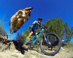 when I'm at war with my self I ride, I just ride - ridestoke: Such a rad shot! Photo Velo, Bike Photo, Motocross, Hardtail Mtb, Mtb Trails, Downhill Bike, Motorized Bicycle, Mtb Bicycle, Fat Bike
