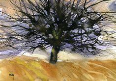 Large black oak   by Paul Steven Bailey